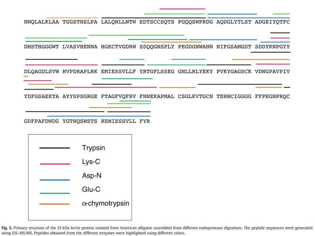 Alligator Lectin Protein Sequence (doi:10.1016/j.cbpb.2011.11.001)