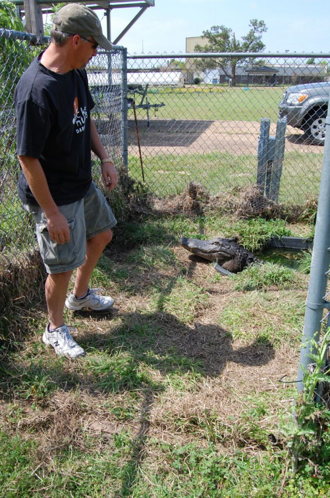 Prof. Mark Merchant with an alligator at McNeese State University March 2009