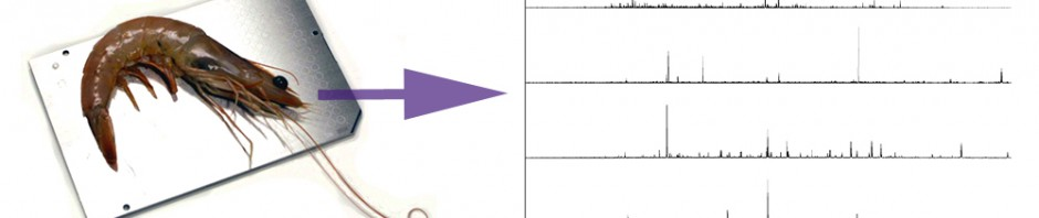 Matrix-assisted laser desorption ionization mass spectrometry for identification of shrimp
