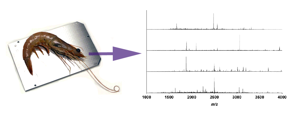 Matrix-assisted laser desorption ionization mass spectrometry for identification of shrimp: http://dx.doi.org/10.1016/j.aca.2013.07.014
