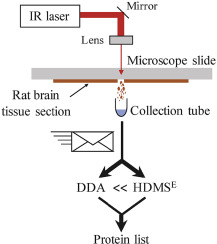 Infrared laser ablation sampling coupled with data independent high resolution UPLC-IM-MS/MS for tissue analysis DOI: 10.1016/j.aca.2018.06.066