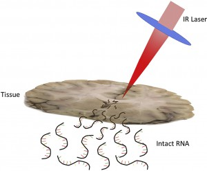 RNA Sampling from Tissue Sections using Infrared Laser Ablation