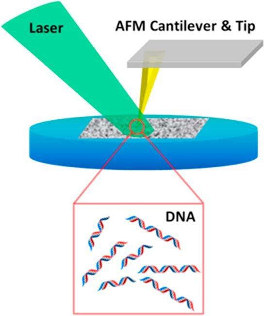 Tip-enhanced laser ablation and capture of DNA