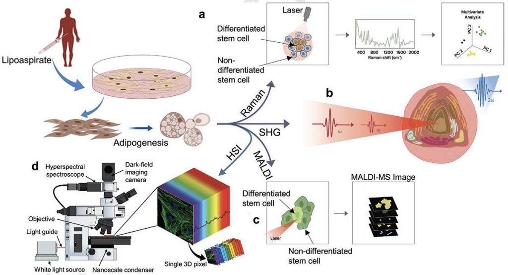 Schematic overview of quantitative label-free imaging implemented at the single-cell level