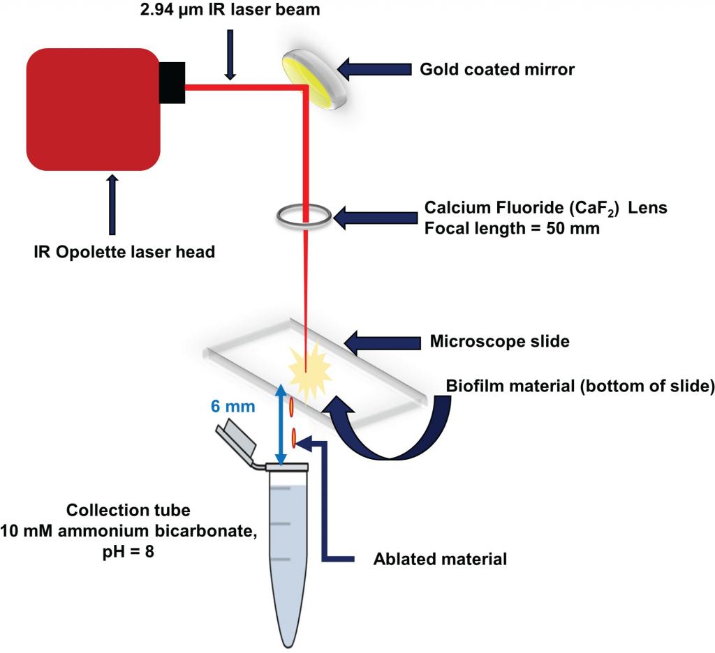 laser ablation sample transfer apparatus.